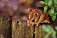 Il Miglior Mouse per un Grafico Professionista